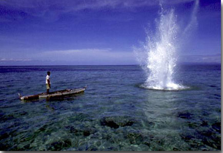 Fishing with dynamite karavansara for Fishing with dynamite manhattan beach
