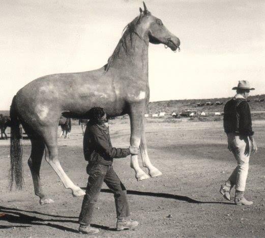 duke's horse