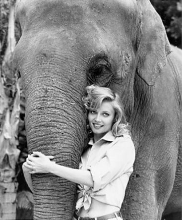 cindy_morgan_-_bring_em_back_alive_-_elephants_-_animal_shows_-_movies_413x500