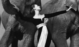 dovima elephants