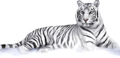 white-tiger-psd-449773