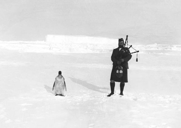 penguin and bagpipe