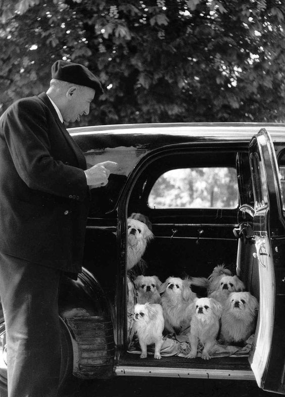 doggies - doisneau