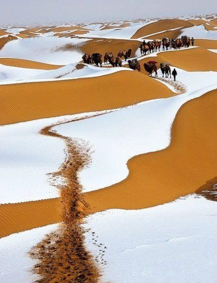 gobi in winter