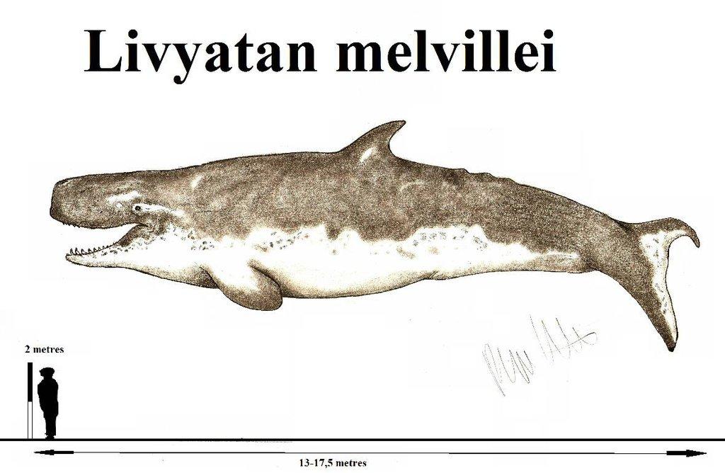 livyatan_melvillei_by_teratophoneus-dao0x8d